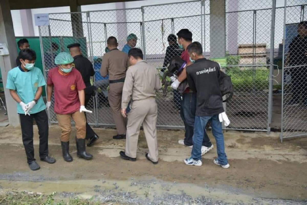 กรมปศุสัตว์ย้ายสุนัขเกรดเดน 13 ตัวไปรับการรักษาที่ รพ.สัตว์คณะสัตวแพทย์ ม.เกษตรฯ