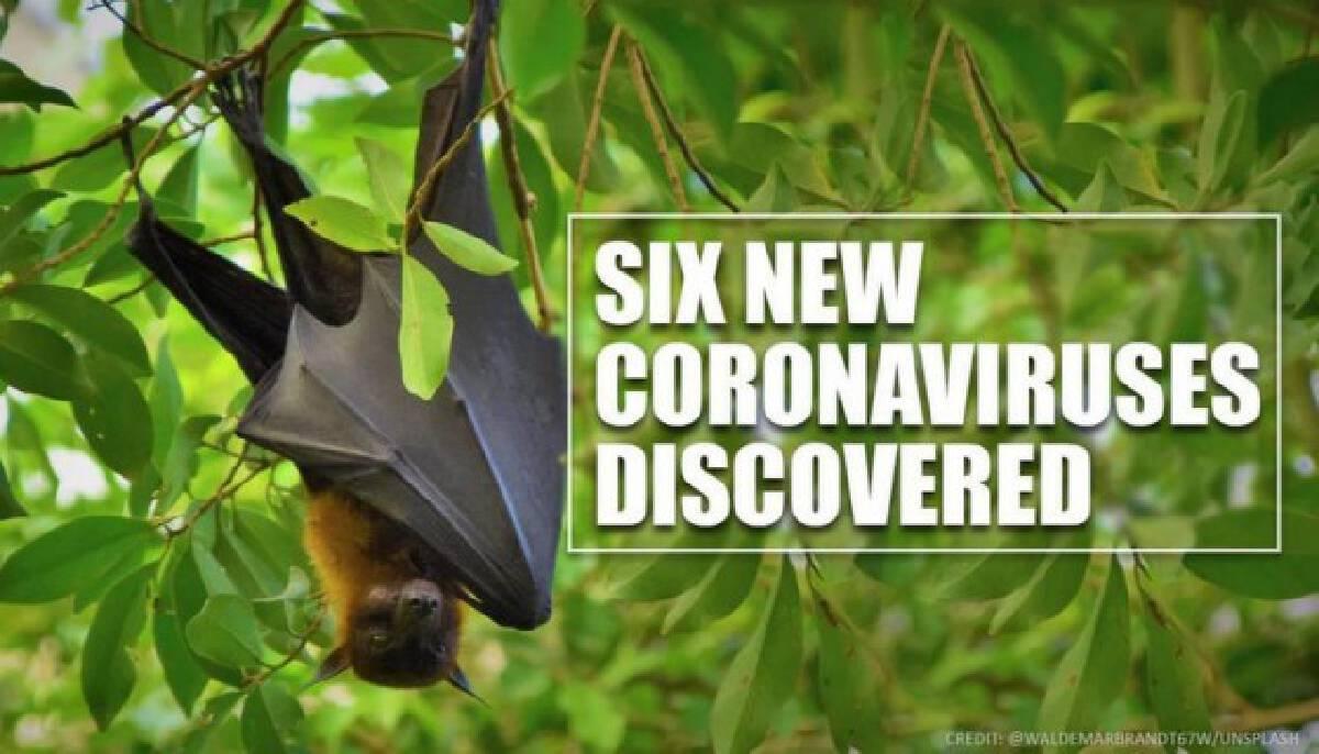 """นักวิทยาศาสตร์ พบ """"โคโรนาไวรัส"""" สายพันธุ์ใหม่ 6 ชนิด ใน """"ค้างคาวพม่า"""""""