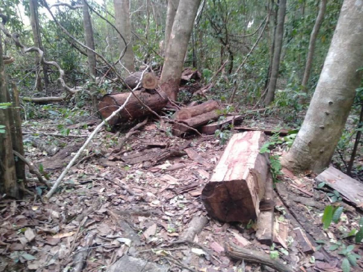 ป่าลั่น...ผลกระทบโควิด-19