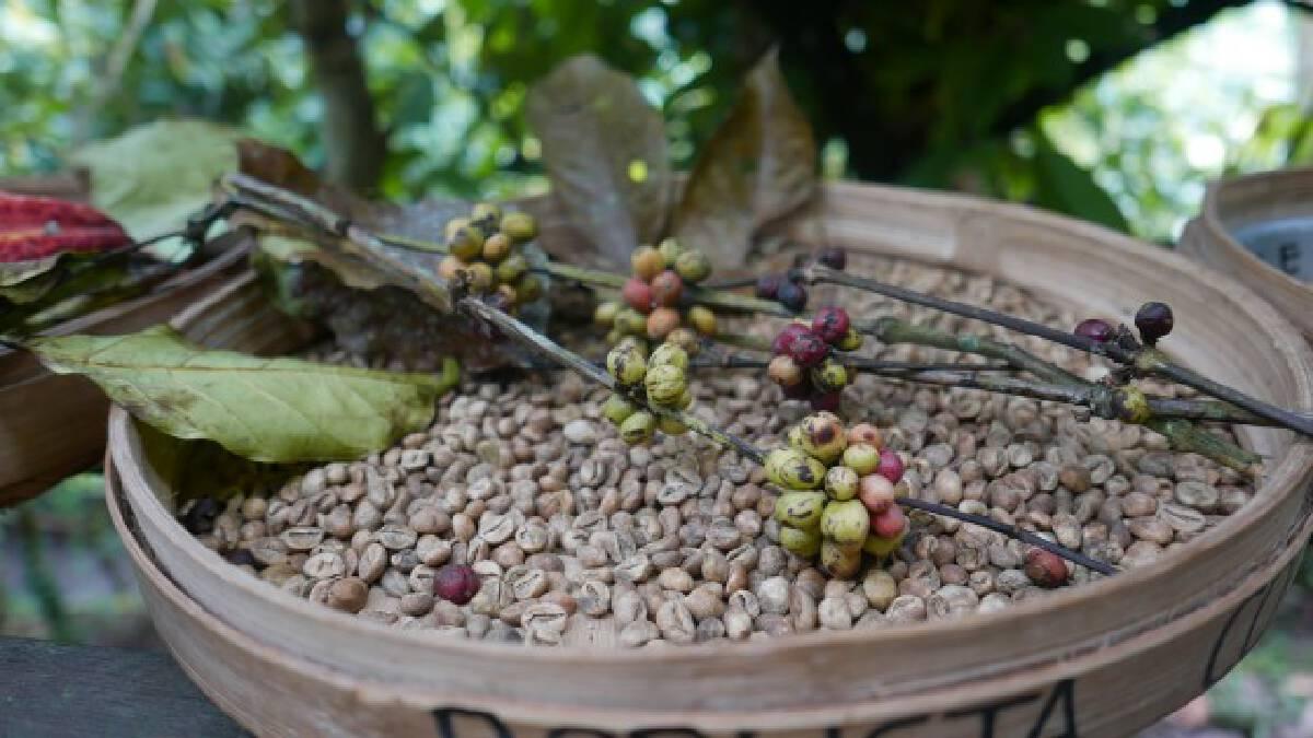 """1 ตุลาคม """"วันกาแฟสากล"""" วันแห่งการเฉลิมฉลองของคอกาแฟทั่วโลก"""