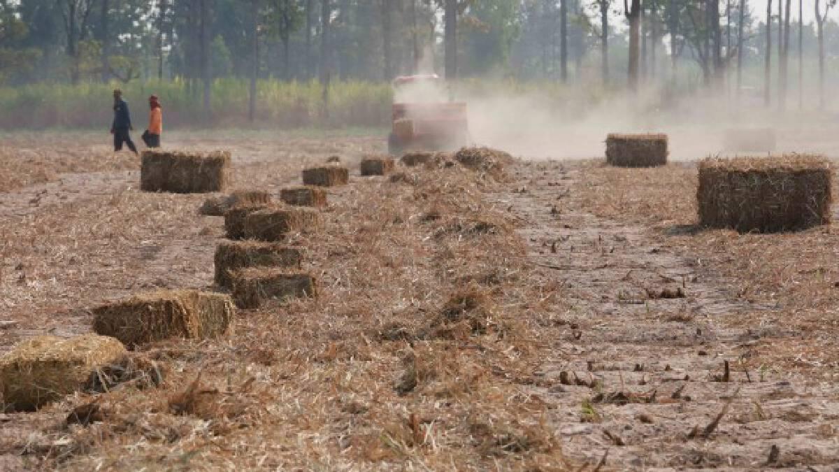กระทรวงอุตฯผุด3แนวทางกระตุ้นเกษตรกรตัดอ้อยสด