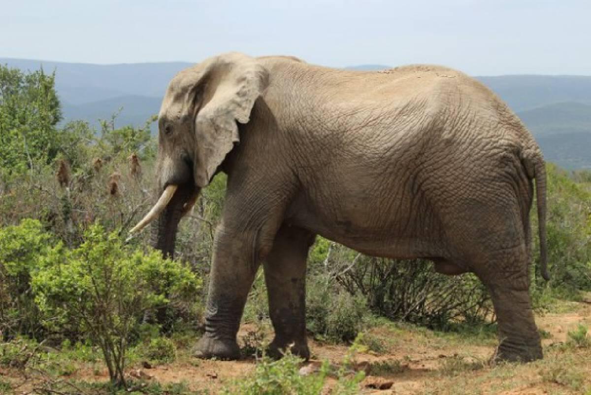 """""""ฝันเห็นช้าง"""" คำทำนายนี้หมายความว่าอย่างไร พร้อมแนะเลขเด็ด"""