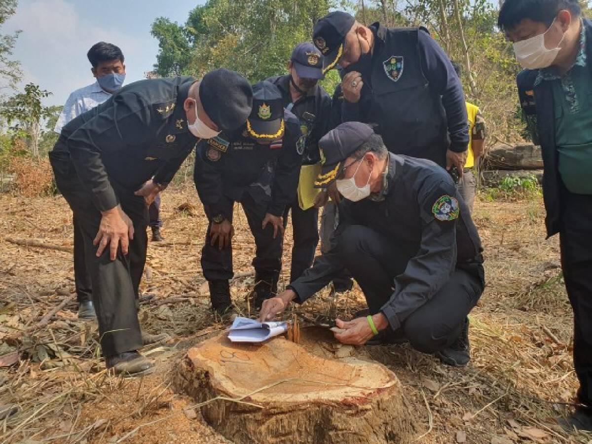 ชุดพยัคฆ์ไพร กรมป่าไม้ เข้มผู้ลักลอบตัดไม้