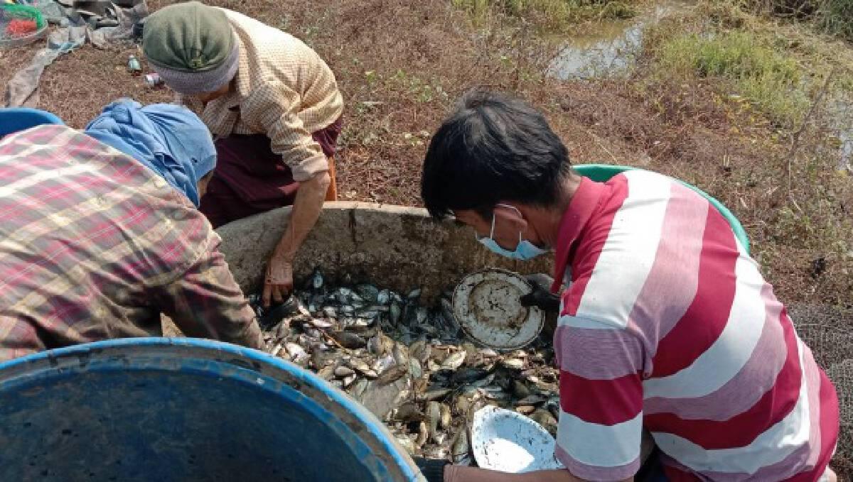 ปชช.แห่เข้าคิวซื้อปลาจากชาวนา สร้างรายได้หลังเก็บเกี่ยว