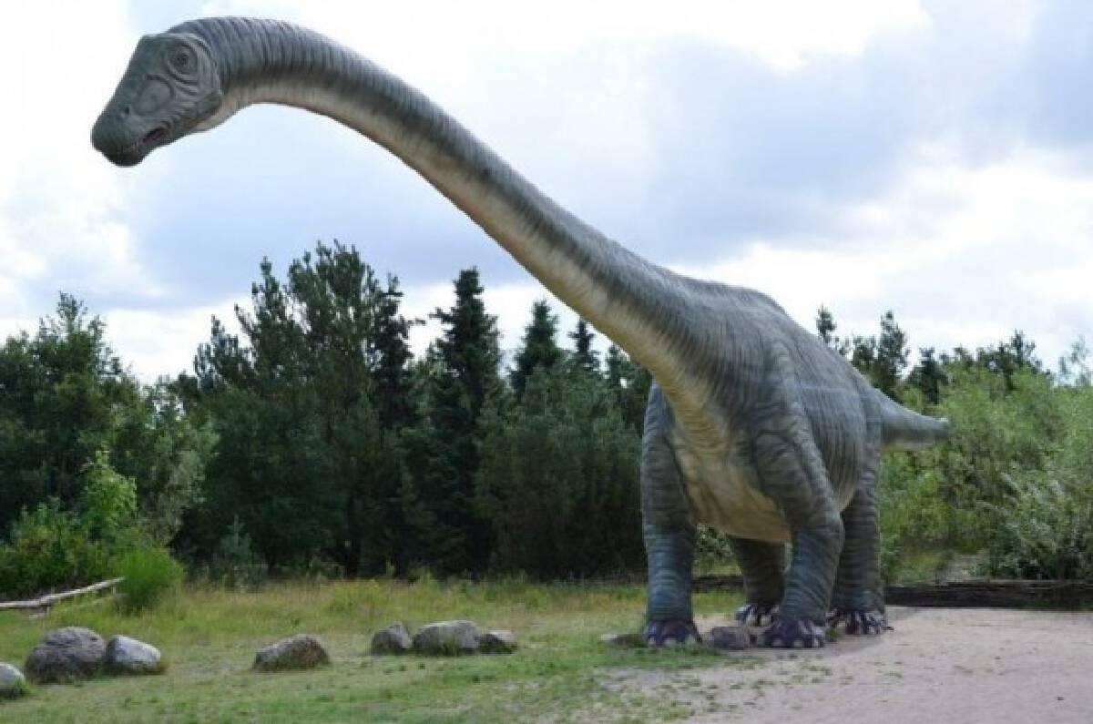 อาร์เจนตินา พบฟอสซิลไดโนเสาร์ตัวใหญ่ที่สุด