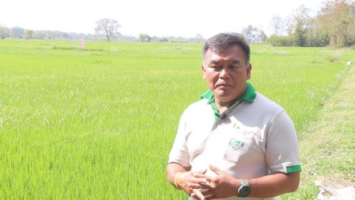 เกษตรกรร่วมวิจัยข้าวเหนียวหอมนาคากับไบโอเทค