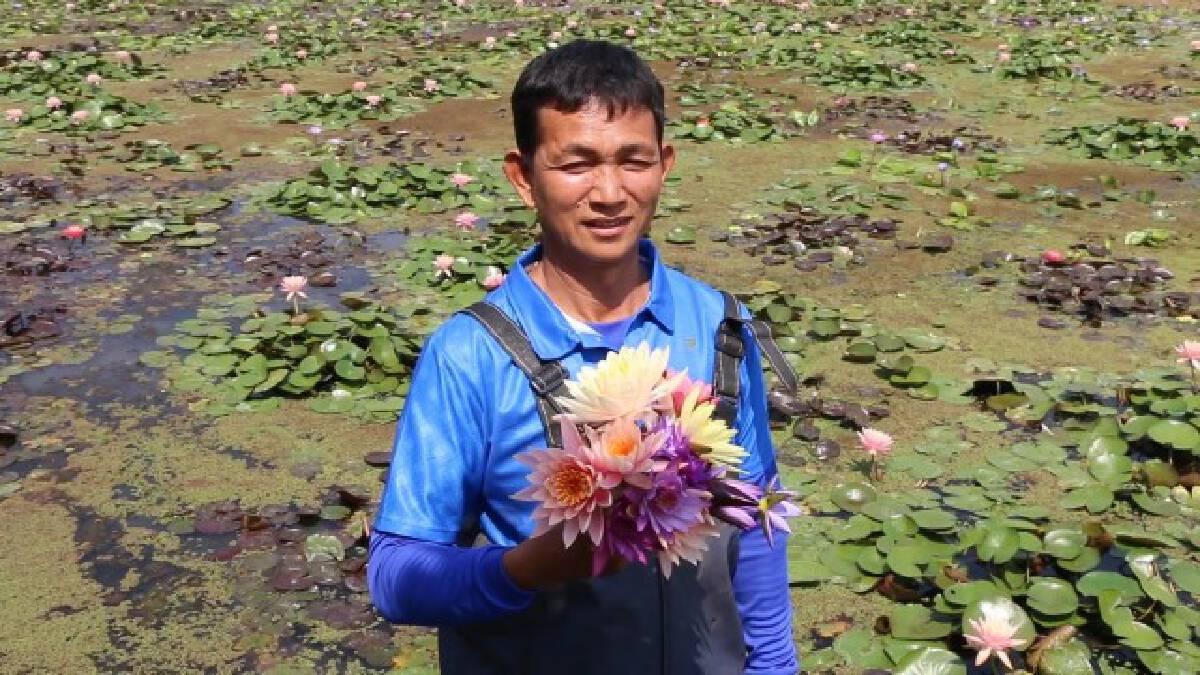 เกษตรกรเจ้าของนาบัวปรับขายออนไลน์สู้โควิด