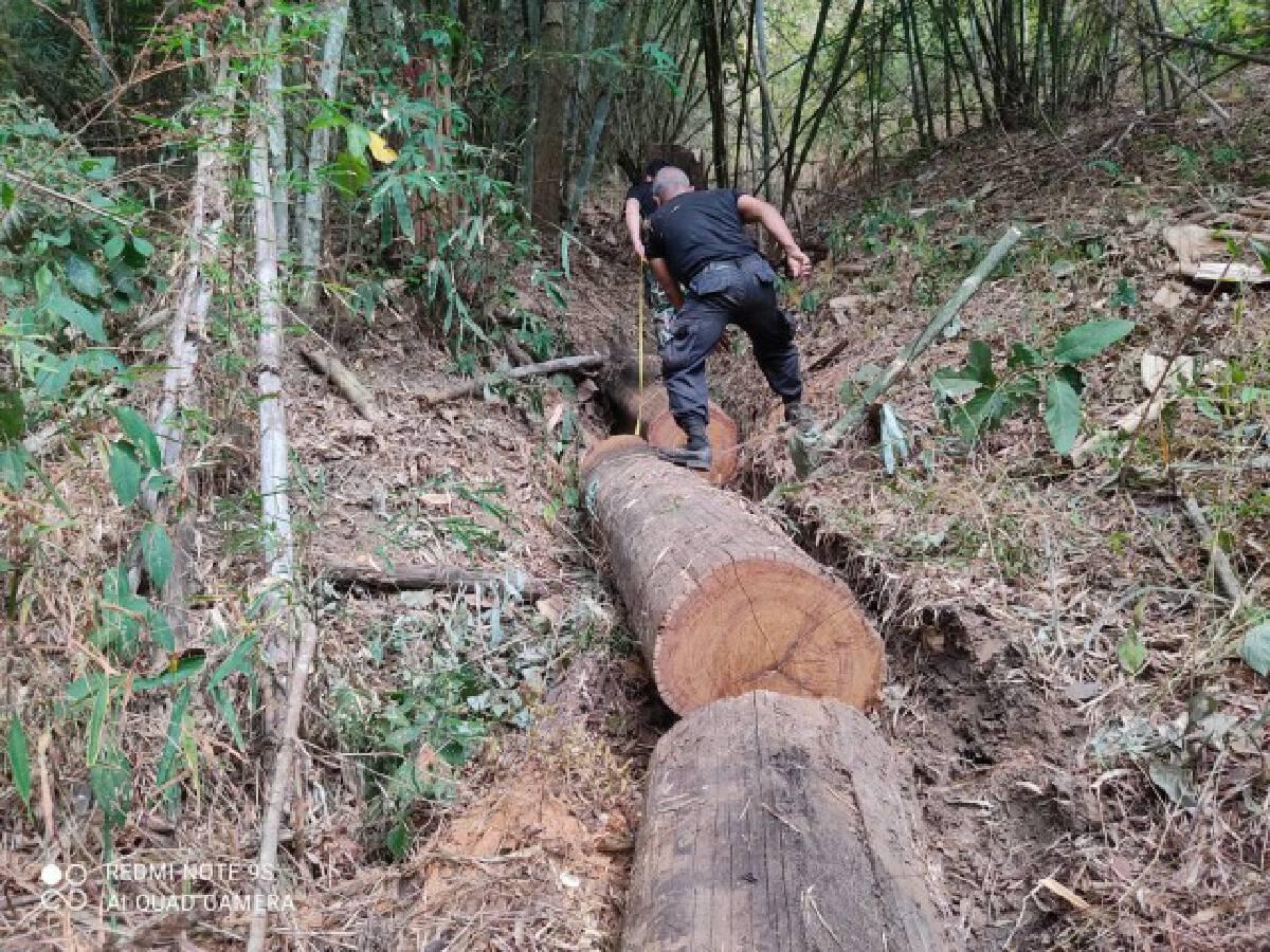 """ยึดไม้ในป่าสงวนฯ""""แม่สอด"""""""