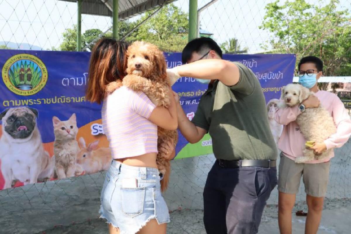 สถ. ร่วมมือ อปท. ทั่วประเทศ ฉีดวัคซีนป้องกันโรคพิษสุนัขบ้า ระหว่างวันที่ 1 มีนาคม – 31 กรกฎาคม 2564