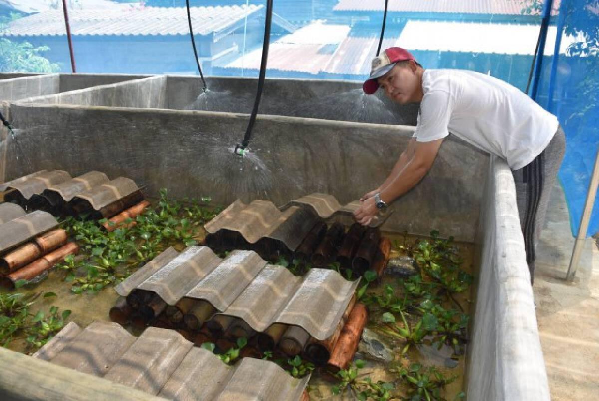 หนุ่มการตลาดสู้โควิด-เลี้ยงปูนาในกระบอกไม้ไผ่