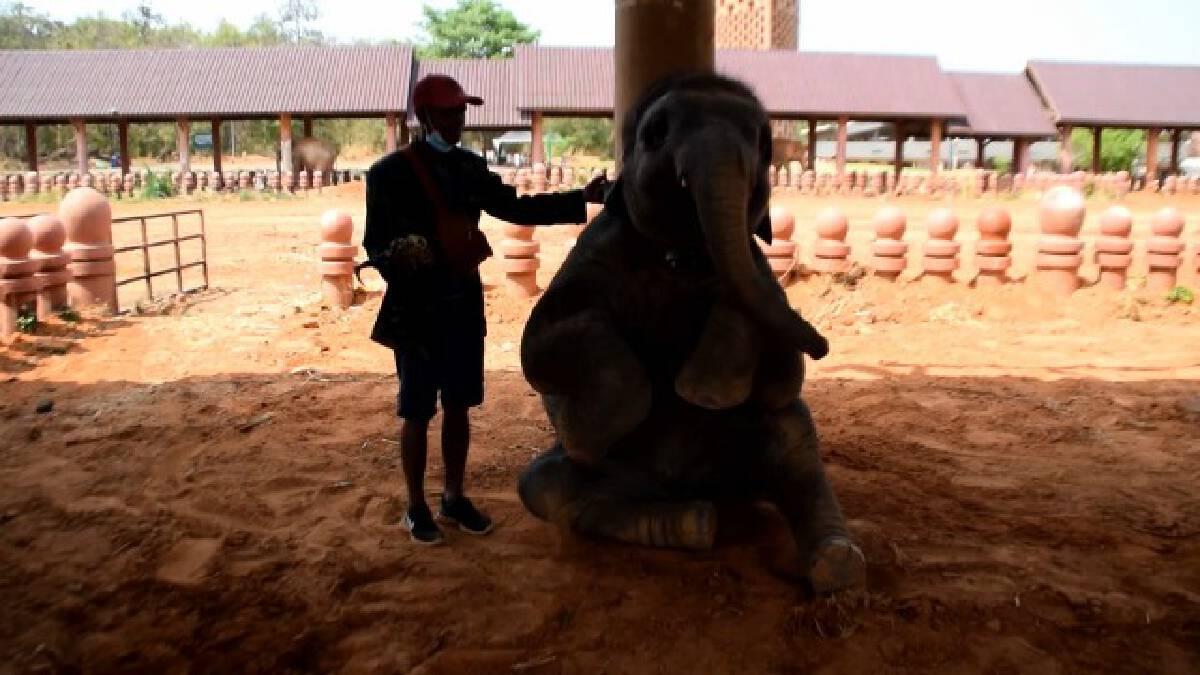 ช้างพลายดาวมงคล แสนน่ารักดังกระฉ่อนในโลกออนไลน์