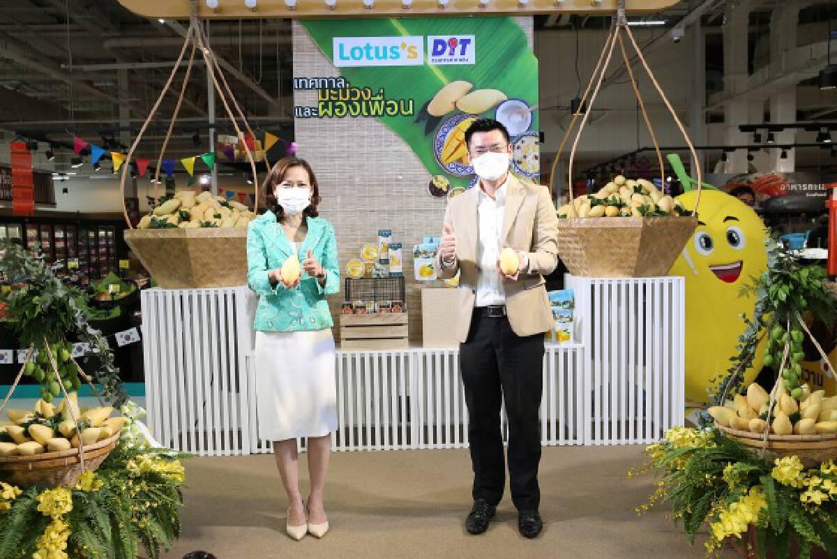โลตัสจับมือพาณิชย์รับซื้อมะม่วง 3.2 พันตัน ช่วยเกษตรกร