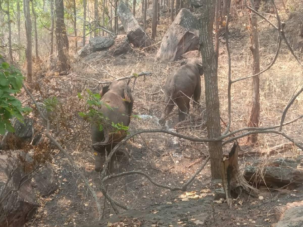 เจ้าหน้าที่เร่งผลักดันช้างเข้าป่า หลังบุกผาสามเกลอ