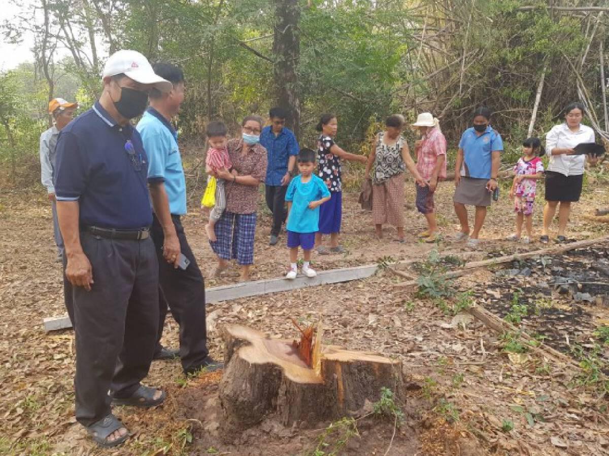 เร่งจับแก๊งมอดไม้พังรั้วร.ร.ลอบตัดต้นพะยูง100ปี