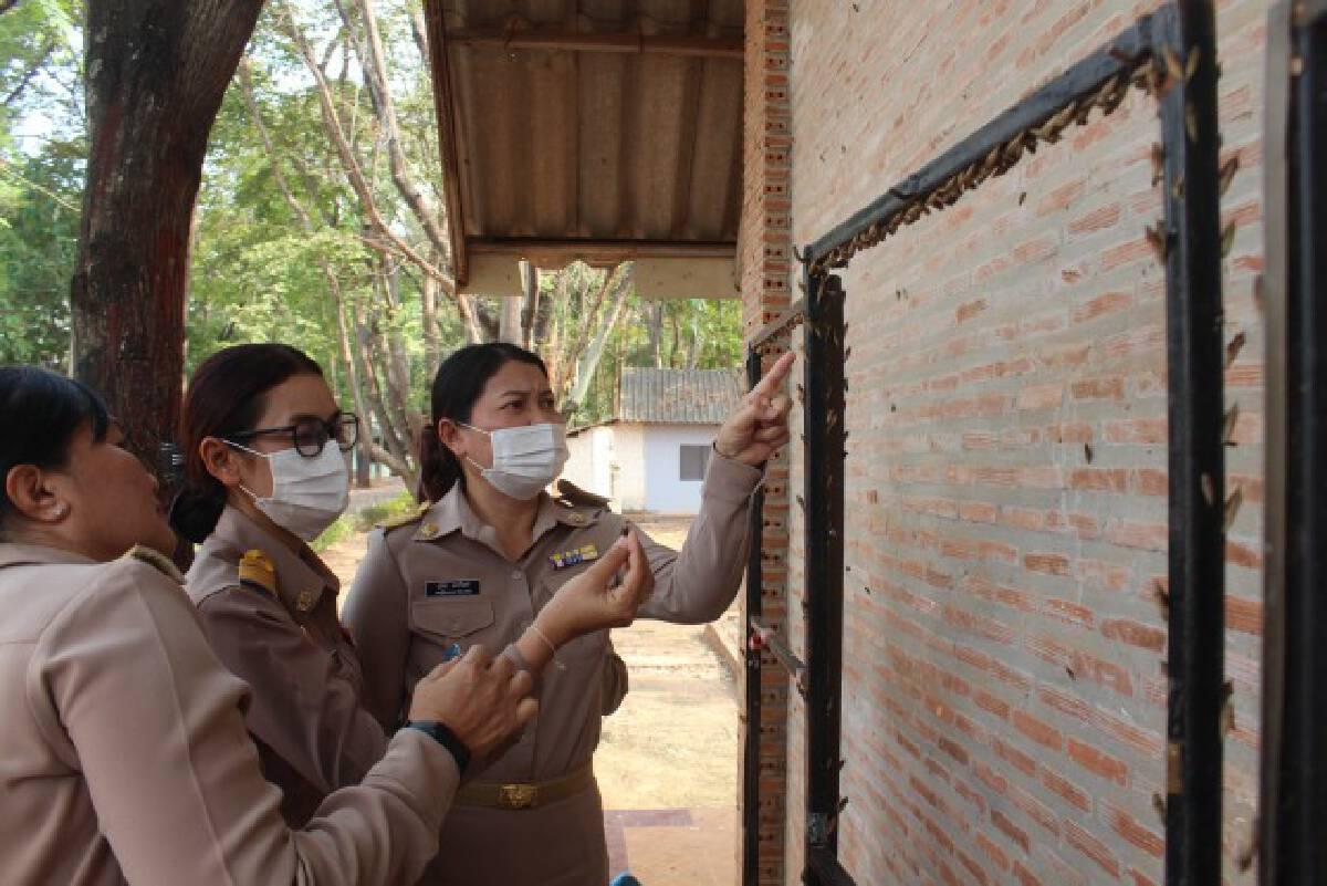 ครูโล่งอก กองทัพหนอนขี้เหล็กไม่มีพิษ หลังบุกโรงเรียนจำนวนมาก