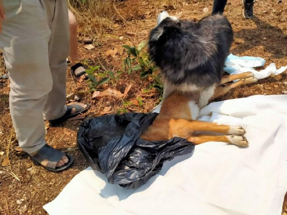 สะเทือนใจ!!น้องหมาเฝ้าศพเพื่อนถูกรถชนกลางถนน
