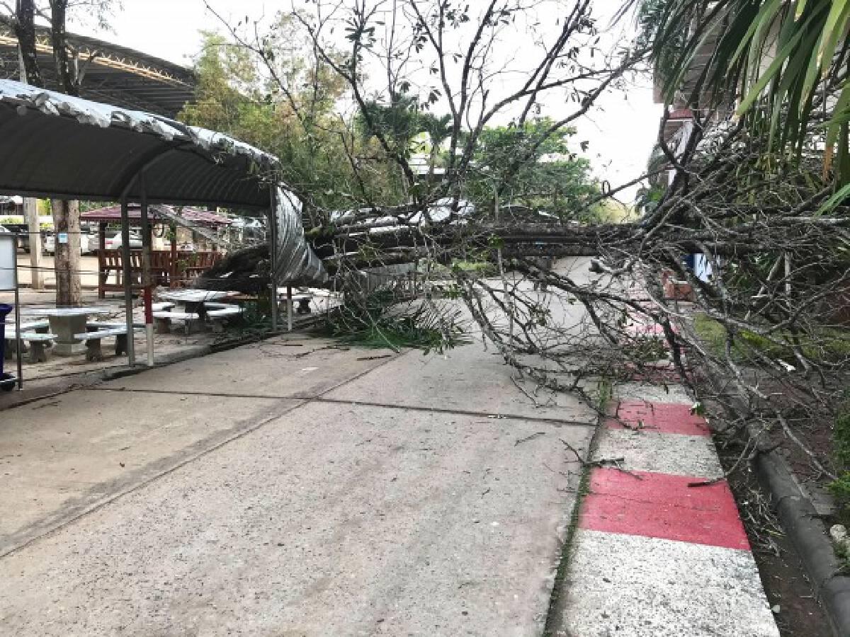 พายุถล่ม ต้นไม้โค่นทับหลังคาทางเดินเท้า-ไฟดับ