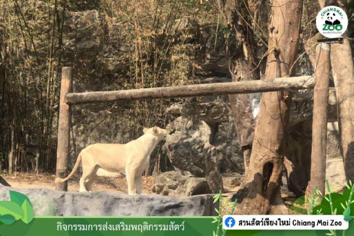 ปิดสวนสัตว์ 14 วัน หลังพบนักศึกษาฝึกงานติดโควิด19