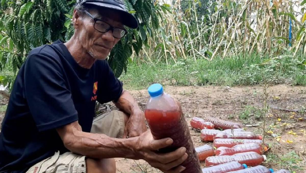 เกษตรกรหันปลูกองุ่นขายแทนมันสำปะหลัง เตรียมเก็บขายปลายเดือนเมษายนนี้