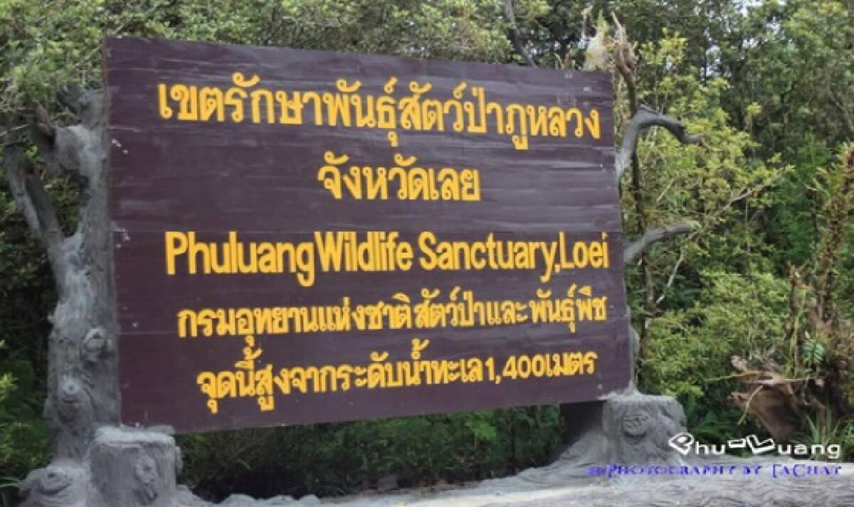 ปิดเกือบหมด เขตรักษาพันธุ์สัตว์ป่าภูหลวงประกาศงดเที่ยวชั่วคราว