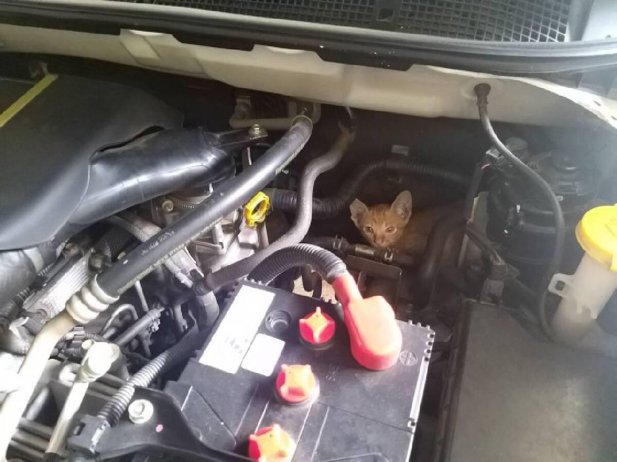 ช่วยแมวติดฝากระโปรงรถ-คาดให้โชค