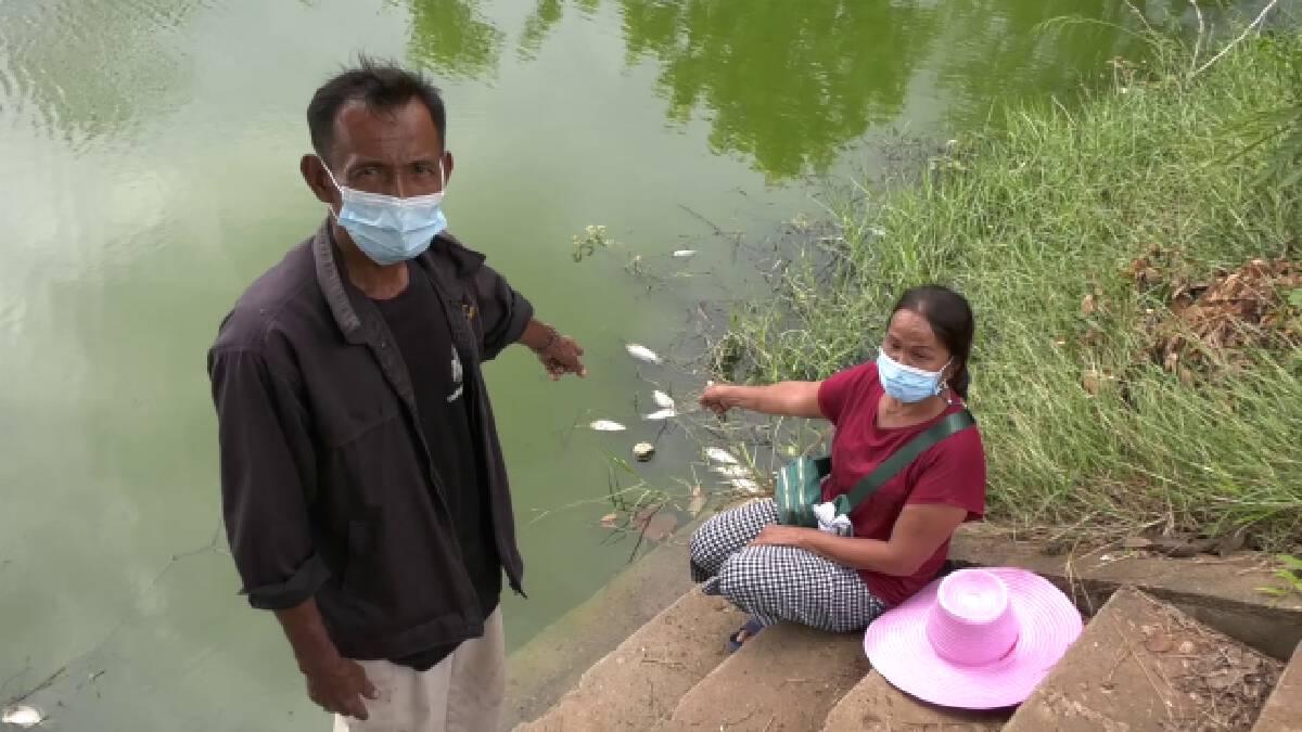 วอนหน่วยงานตรวจสอบน้ำเน่าปลาตายเกลื่อนนับหมื่นตัว