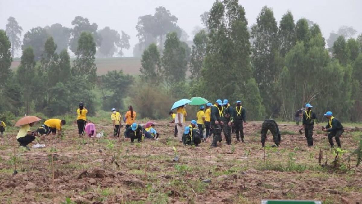 โครงการปลูกป่าและป้องกันไฟป่า วันต้นไม้ประจําปีของชาติ