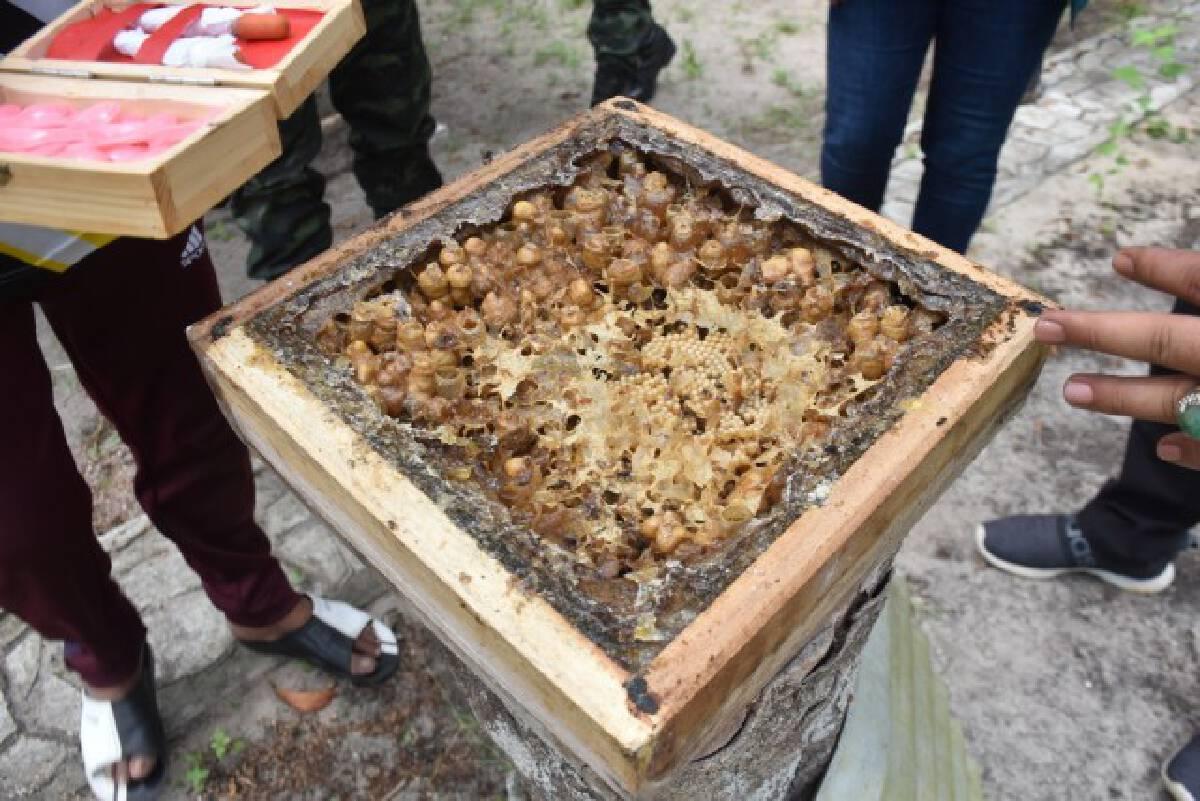 เชื่อมเครือข่ายกลุ่มเลี้ยงผึ้งชันโรงเกาะแลหนัง