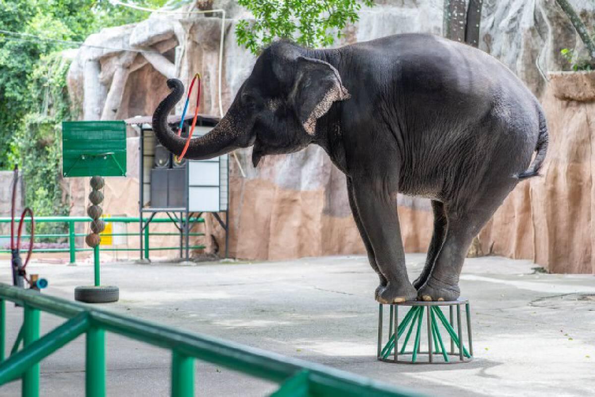 สวนเสือศรีราชา ประกาศขายช้างยกโขลง พร้อมคนดูแล เซ่นพิษโควิด-19