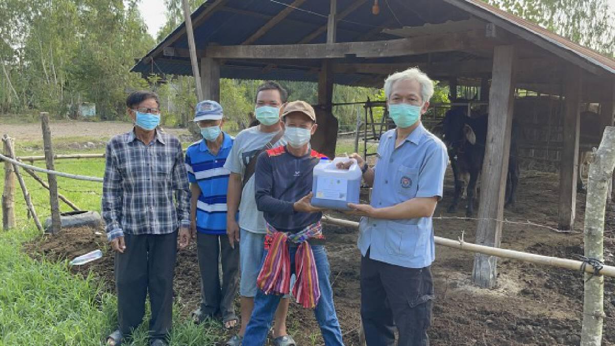 พบวัวป่วยโรคลัมปีสกินนับพันตัวทั้ง9อำเภอเร่งช่วยเหลือ