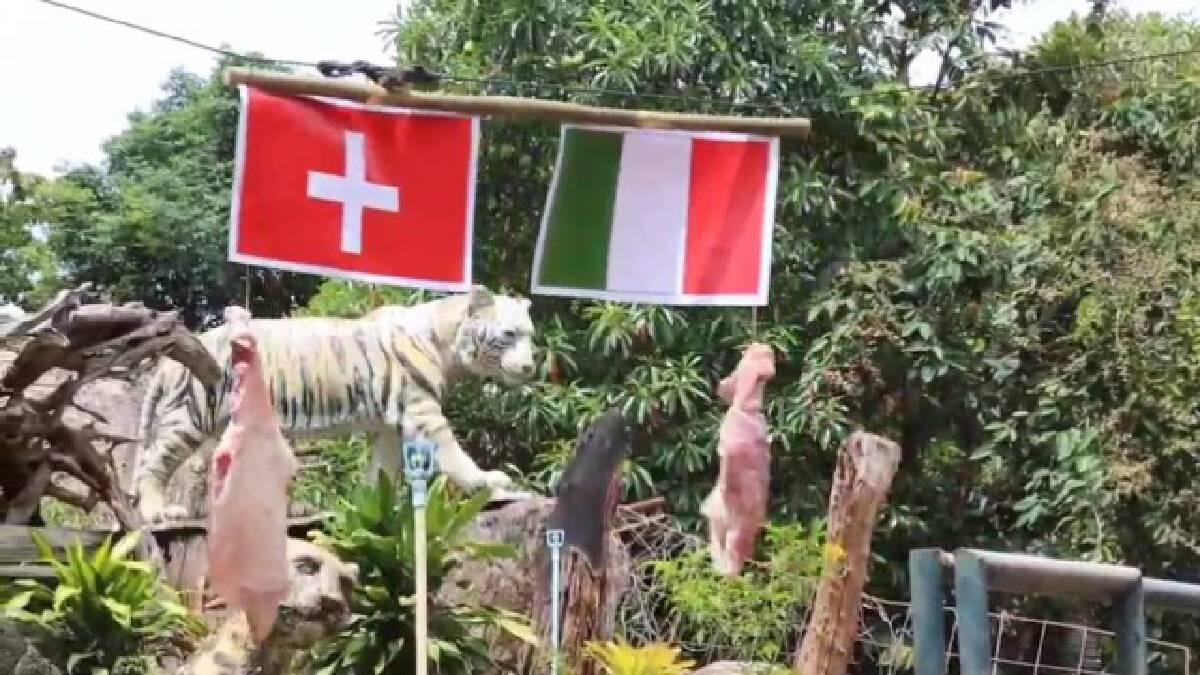 สวนสัตว์โคราช จัดกิจกรรมทายผลบอลยุโรป