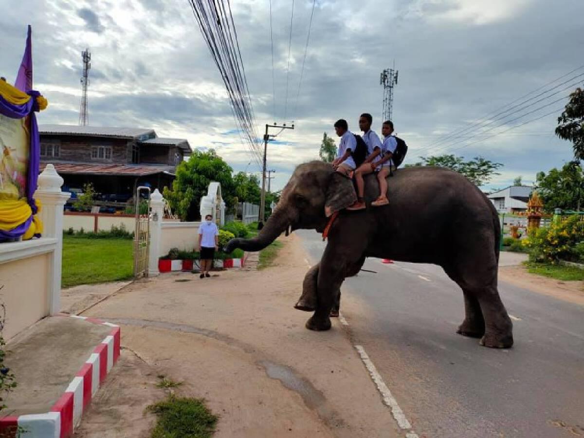 ภาพน่ารัก!! ครูสุรินทร์โพสต์ภาพนักเรียนขี่ช้างไปโรงเรียน