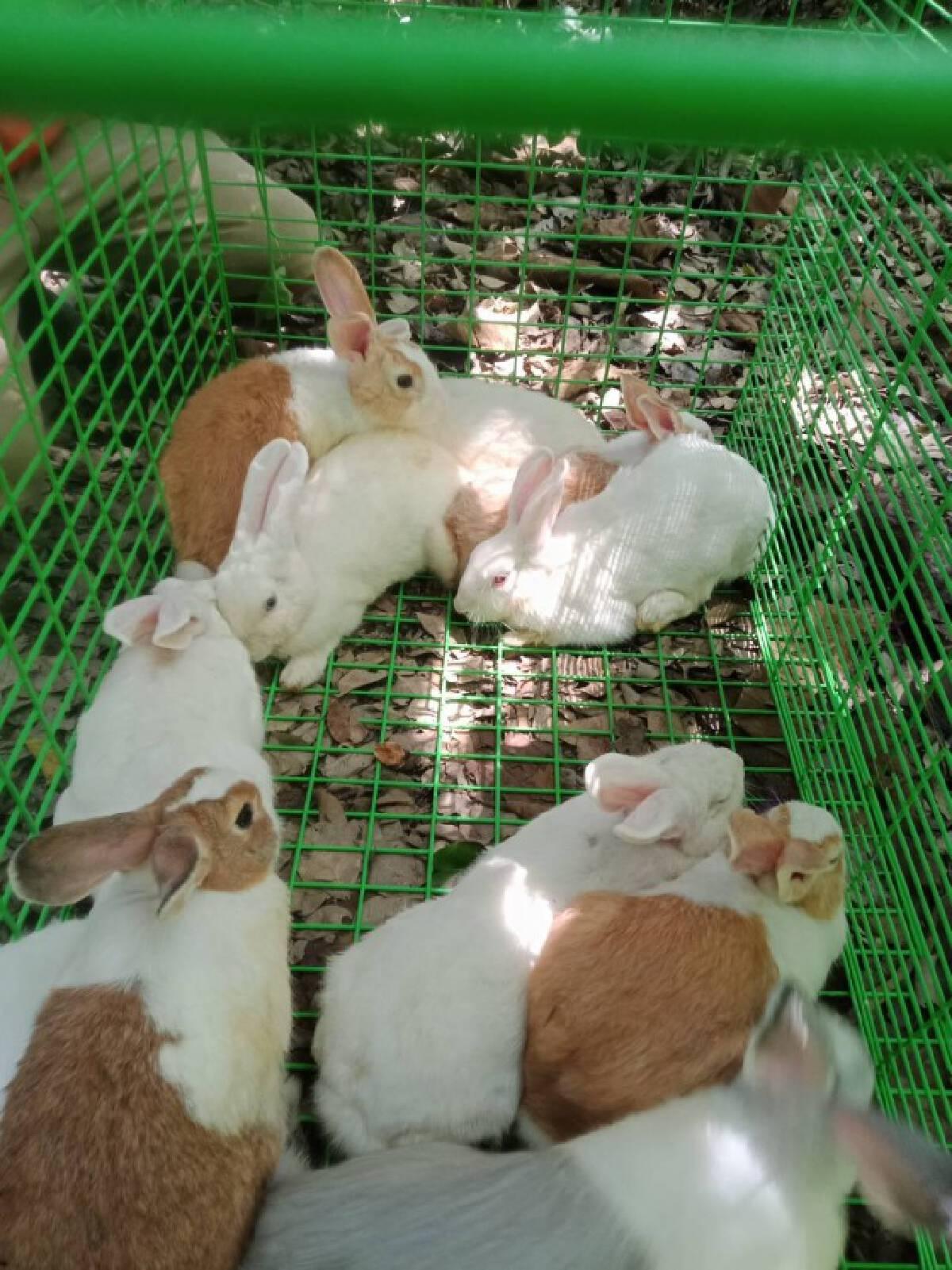 ถูกพิษโควิด-ทิ้งกระต่ายในบ้านร้าง