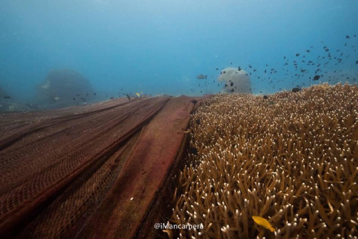 ทส.เคลียร์อวนยักษ์ติดปะการัง เกาะโลซิน