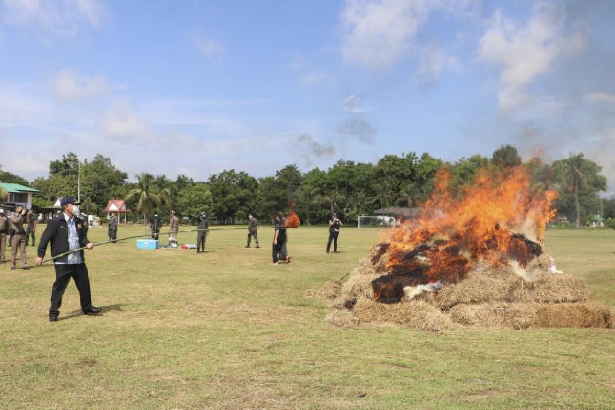 จ.นครพนม เผาทำลายกัญชาตรวจยึด เกือบ 2 ตัน มูลค่ากว่า 40 ล้านบาท