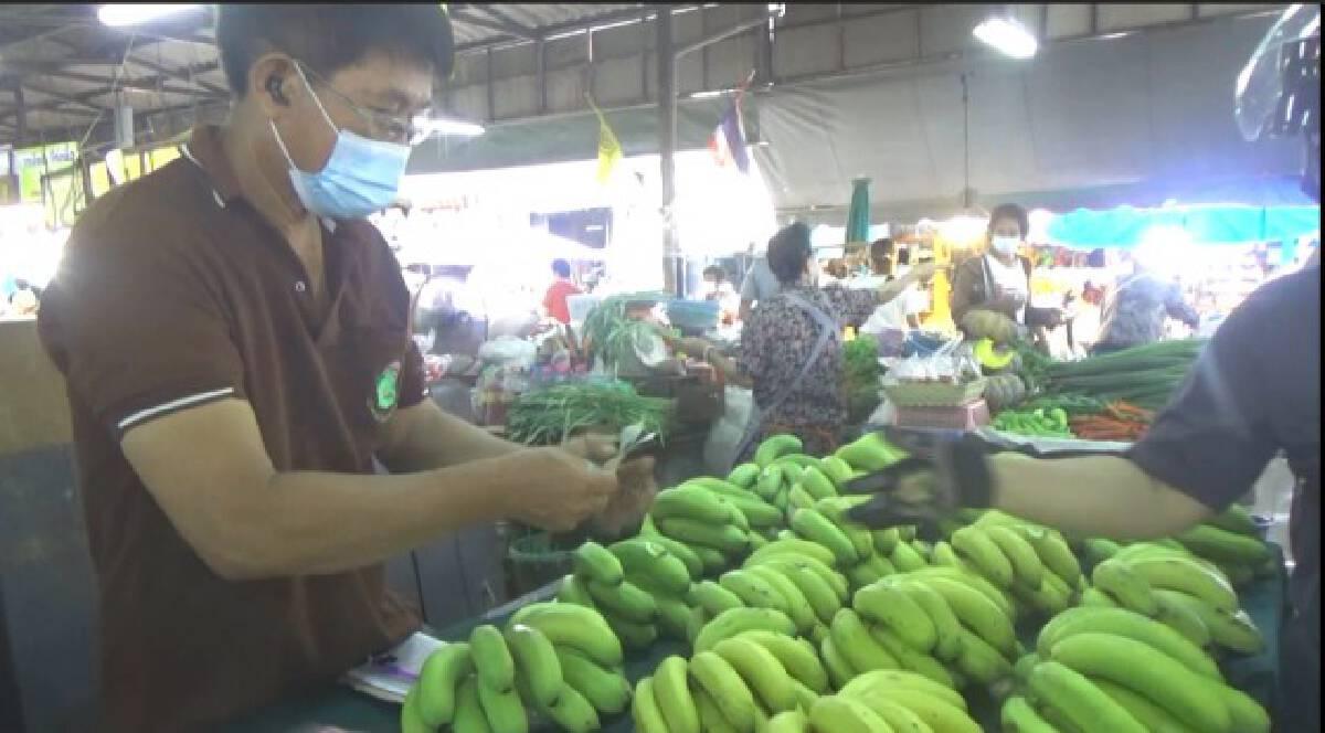 ฮือฮา!ขายหน่อกล้วยด่าง7หมื่นบาท