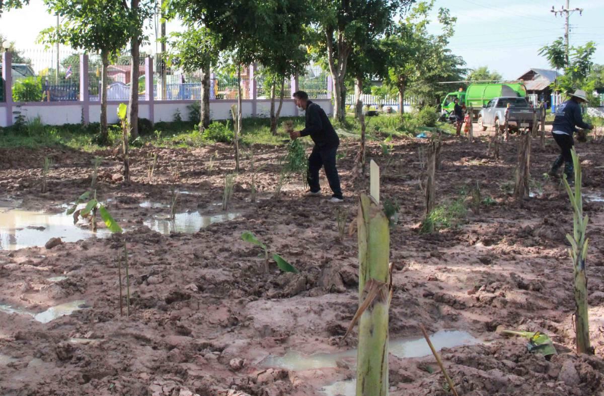 ทำสวนสมุนไพรพื้นบ้านเป็นคลังยาช่วยผู้ป่วยติดเชื้อโควิด-19