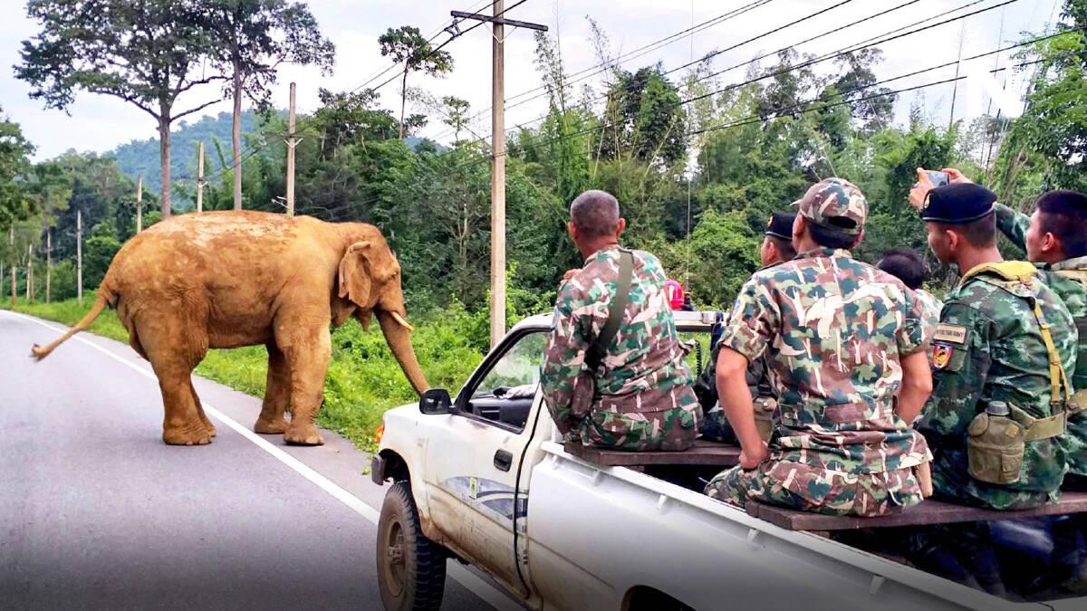 """จนท.เฝ้า 24 ชม.ไล่ """"ช้างป่ากุยบุรี"""" ไม่ให้เข้าใกล้ชุมชน"""