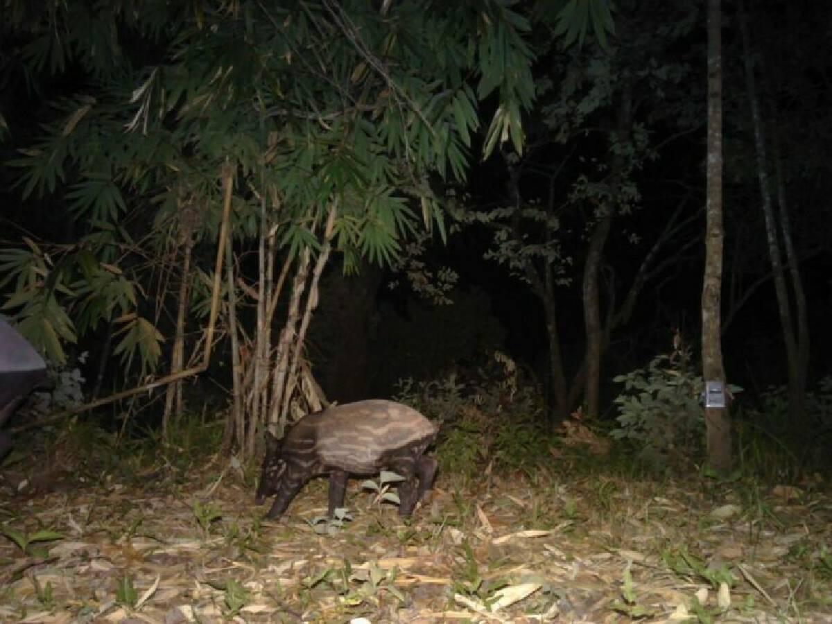 อช.เผยภาพเสือดำหวนกลับมาผืนป่ากาญจนบุรี