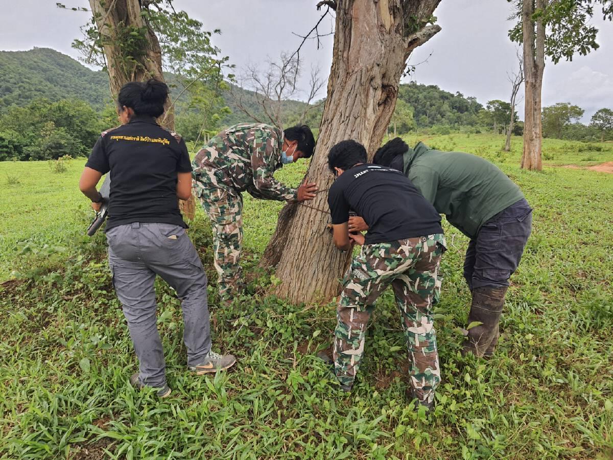เจ้าหน้าที่เฝ้าระวังสัตว์ป่า อช.กุยบุรี ติดโรคลัมปี สกิน