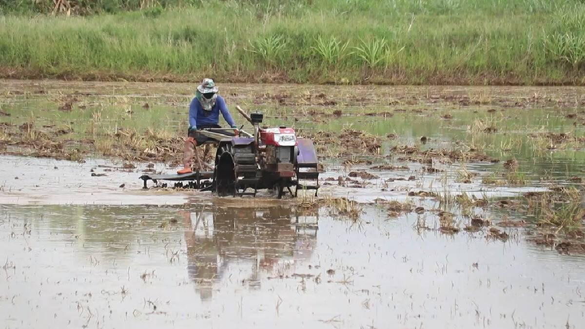 """""""แม่น้ำยม""""คลายวิกฤติ หลังแห้งขอดมากว่า6เดือน-เกษตรกรเร่งทำนา"""
