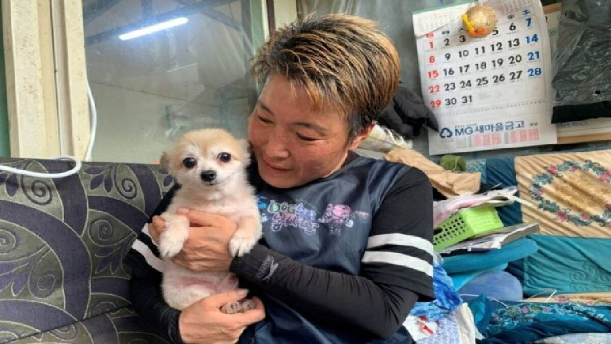 """ข่าวดีคนรักสัตว์ """"เกาหลีใต้"""" เตรียมให้สถานะภาพทางกม. แก่สัตว์"""
