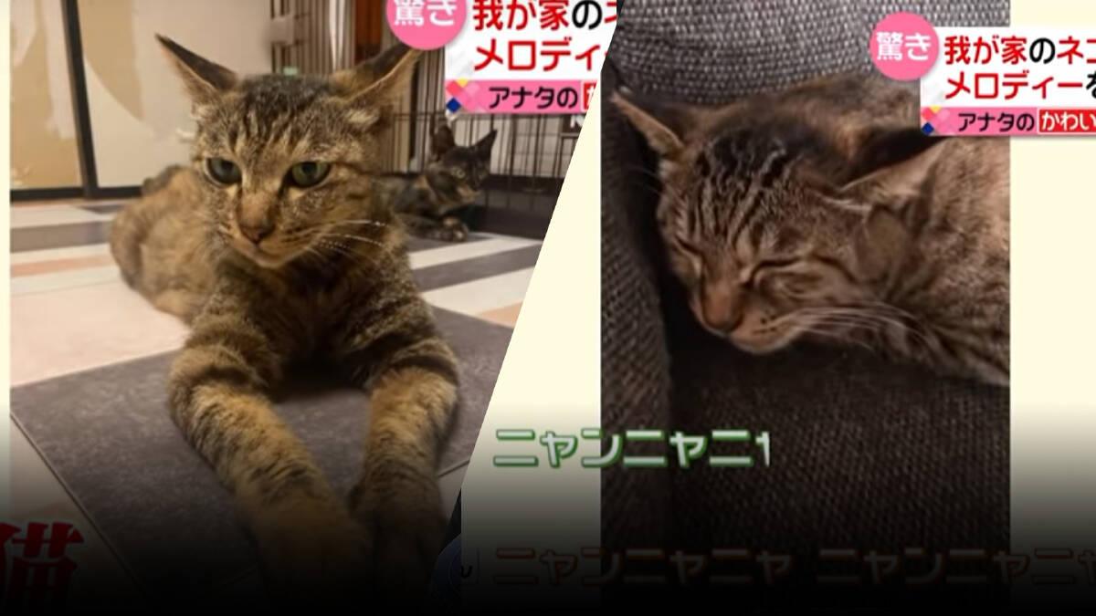"""เกือบ 3 ล้านวิว! """"โซระจัง"""" แมวอัครศิลปิน ฮัมเมโลดี้สุดเหมือน"""
