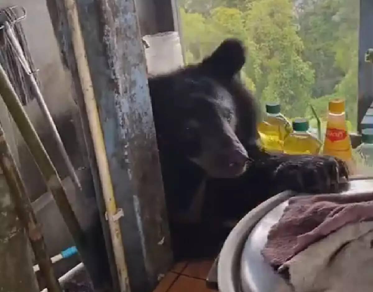 """ขอกินหน่อย! โซเชียลแห่ชมคลิป """"น้องหมีควาย"""" เขาใหญ่ อยากกินไข่เจียว"""