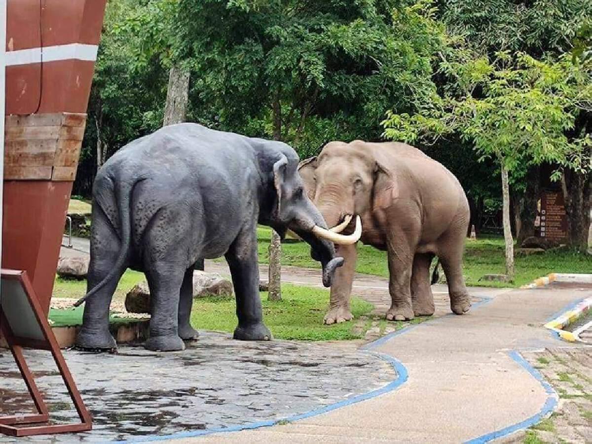 """แชร์สนั่นศึก """"ช้างชนช้าง"""" กลางเขาใหญ่"""