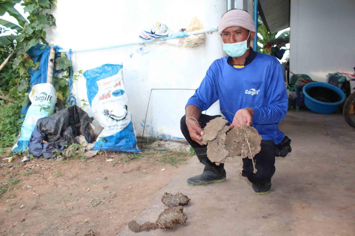 อาชีพแปลก หนุ่มเลี้ยงต่อหัวเสือขายตัวอ่อนเสริมรายได้ยุคโควิด