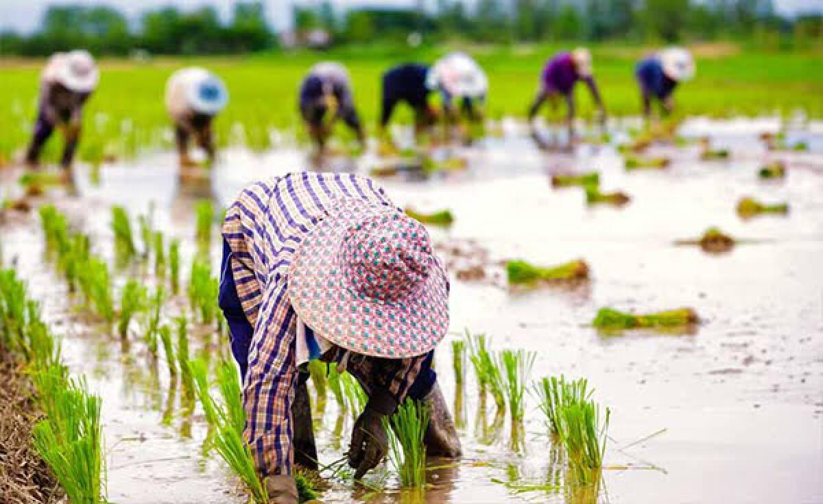 ครม.อนุมัติงบกลางฯ 869 ล้าน อุดหนุนเกษตรกร