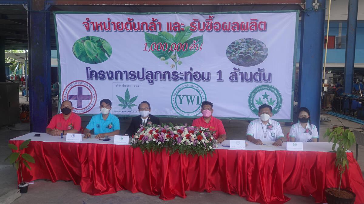 สมาคมผู้ปลูกพืชทางเลือก ชวนเกษตรปลูกกระท่อม 1 ล้านต้น