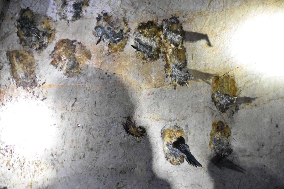 แทบช๊อก!! สำรวจเกาะรังนกถูกขโมยเกลี้ยงก่อนส่งมอบพื้นที่