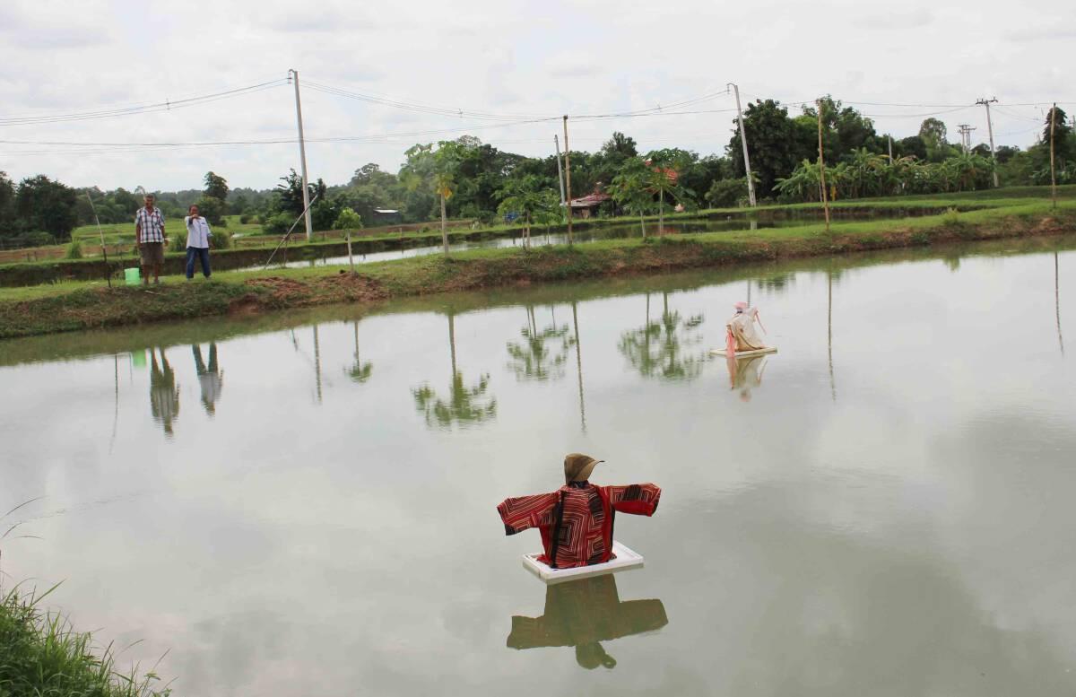 เกษตรกรนำภูมิปัญญาทำหุ่นไล่นกกาน้ำศัตรูกินกุ้งก้ามกราม